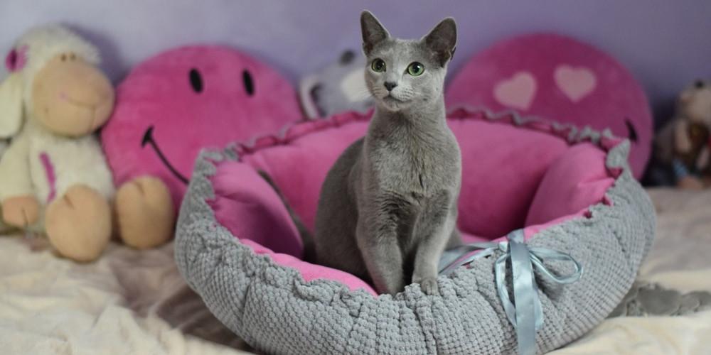 pelech pre mačky DAISY